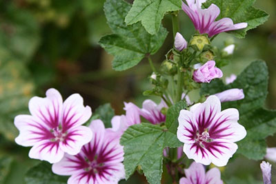 Terry Hershey: Terry's Garden &emdash; IMG_5002