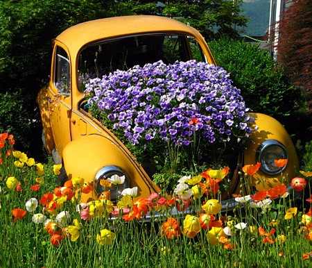 car-plants